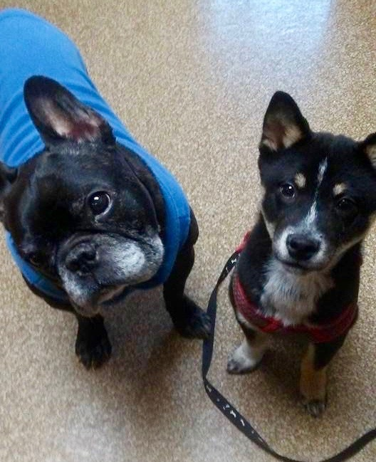 Tango and Marco at Milford Animal Hospital
